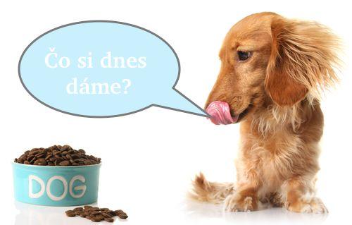 Aj kŕmenie psov je alchýmia: 7 vecí, na ktoré by ste nemali zabúdať