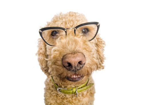 Aký múdry je váš pes?