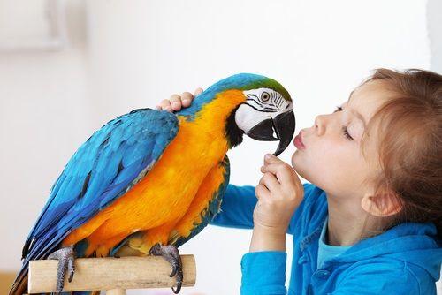 Ornitoterapia