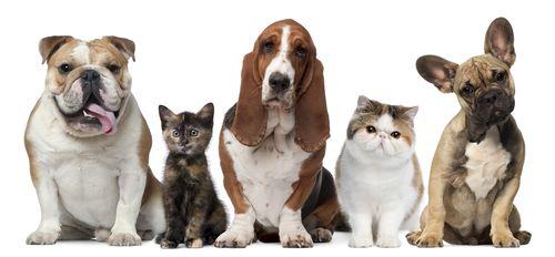 Vnútorné pazity u psov a mačiek