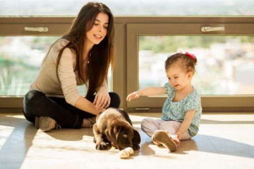 Čo zvážiť pri výbere psa do rodiny?