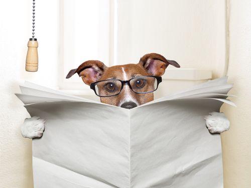 Pes s papiermi alebo bez?