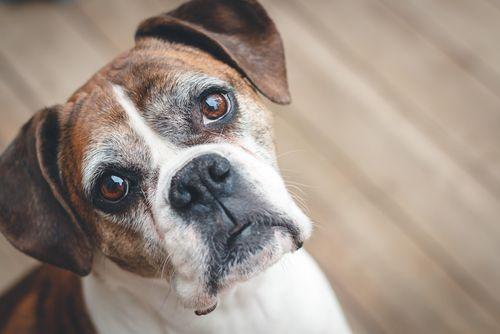 8 druhov ovocia a zeleniny, ktoré má pes zakázané