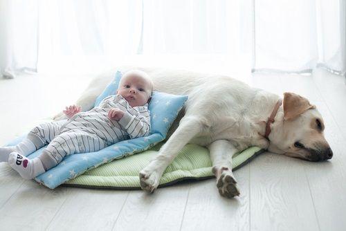 Aj rodinný pes môže predstavovať pre dieťa hrozbu