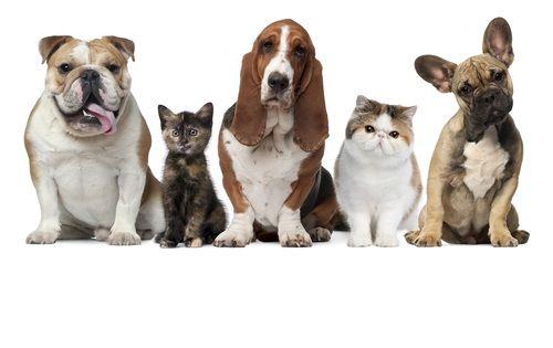 Pes je všežravec a mačka mäsožravec
