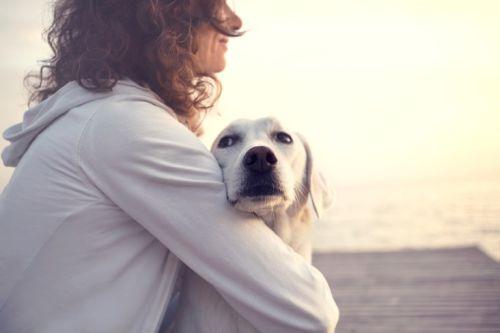 Prečo má pes strach?