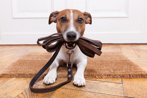 TOP 5 problémov pri venčení psa