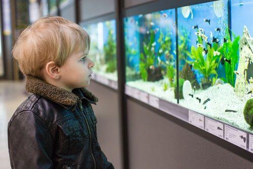 Prečo akvárium