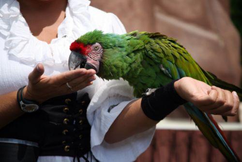 Kúpanie papagája