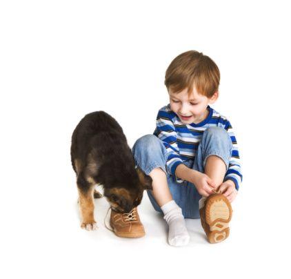 Hierarchia v rodine z pohľadu psa