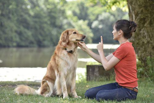 5 najčastejších mýtov o výcviku psov