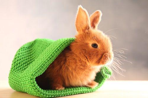 Zajac ako domáci miláčik...