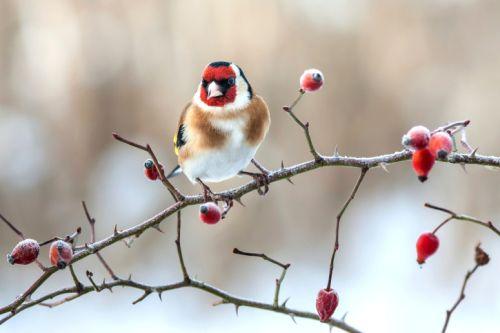 Ako sa starať o zimné vtáctvo počas celého roka