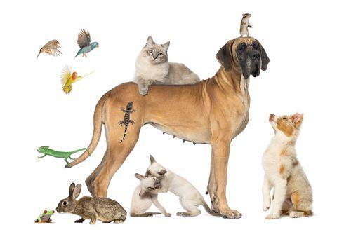 Zvieracie spolužitie? Nastolte mierové pravidlá