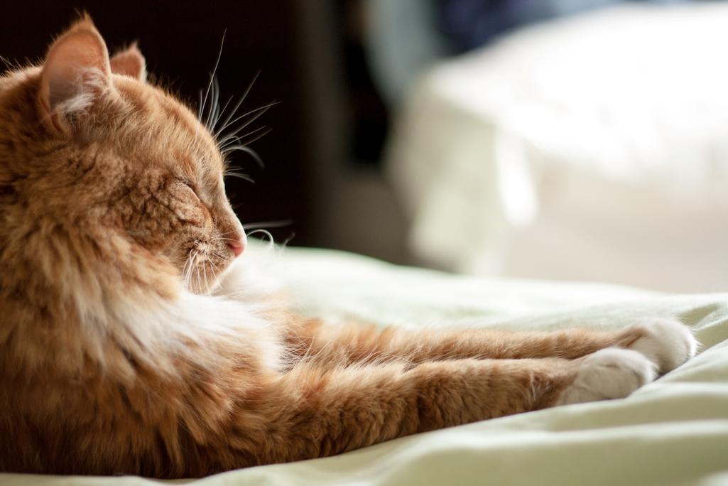 Prečo mačka škrabe