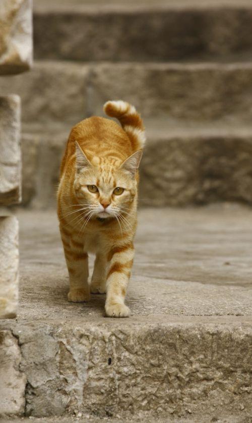 Nezávislá mačka. Outdoor.