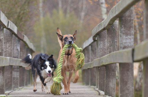 Hra na telefón alebo ako si užiť prechádzku so psom na vodítku