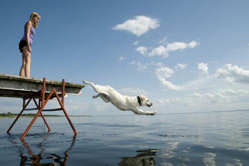 10 psov ktorí zvládajú horúčavy