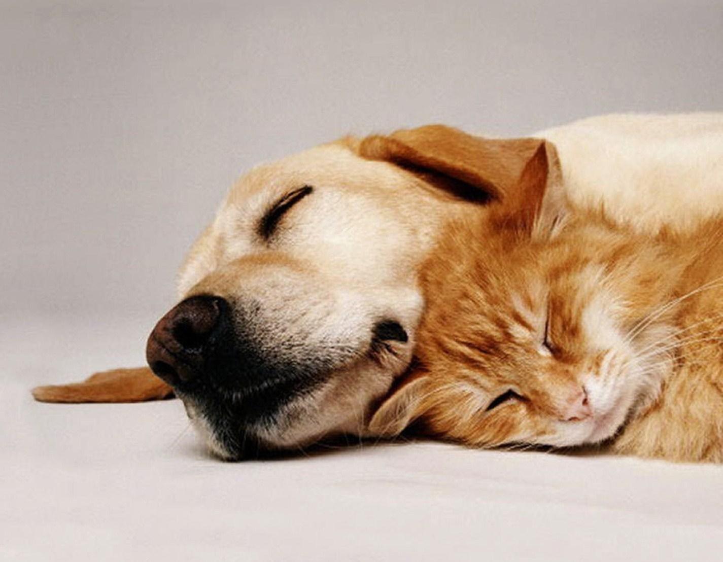 Pes a mačka – priatelia