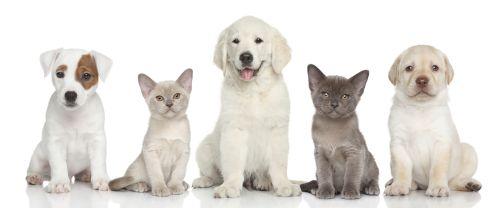 Ako na parazity u psov a mačiek: 5 zásad