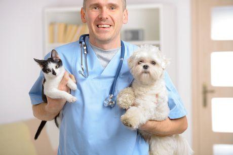 Odčervovanie psov a mačiek
