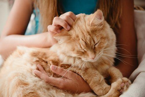 """Niečo pre """"novomačkárov"""" alebo Dôležité veci, ktoré by ste si mali premyslieť, kým si zaobstaráte mačku"""