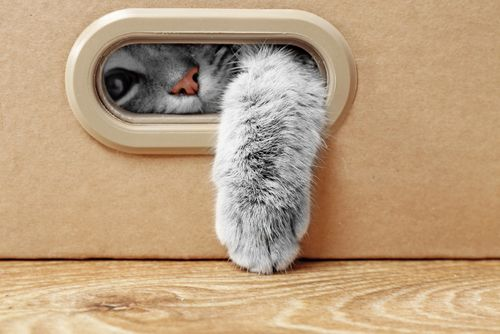 Kto sa bude starať o mačku cez dovolenku?