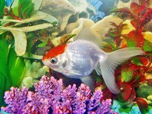 Feng Shuej a akvárium